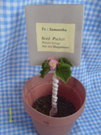 Seed packet with flower pot.