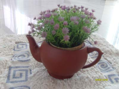 Old tea pot can be a unique flower pot.